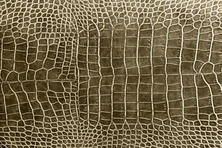l�zard: teinte brun texture peau de crocodile comme fond d'�cran Banque d'images