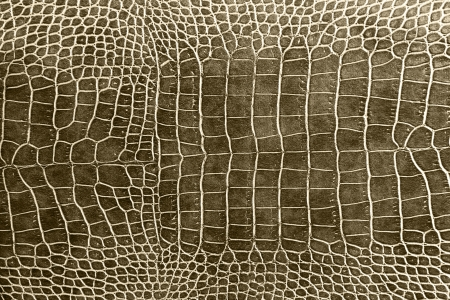 the reptile: tint brown crocodile skin texture as a wallpaper