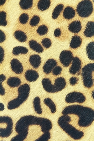 leather coat: background of leopard skin pattern Stock Photo