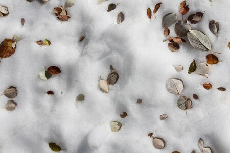 dry leaf on the snow Stock Photo - 17040094