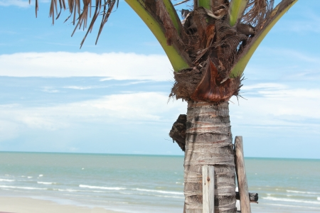 coconut tree near the beach in thailand photo