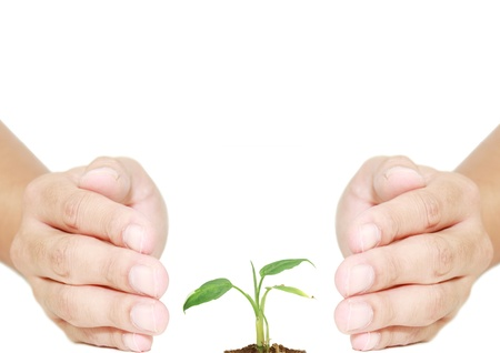 isolated hand protecting plant for eco system photo