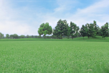 background of green grass with the tree with the blue sky photo
