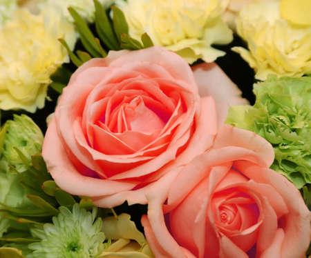 background of beautiful rose photo