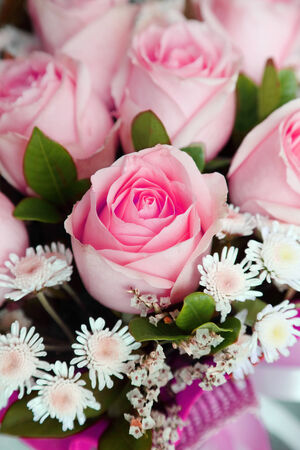 background of pink roses Stock Photo - 25191760