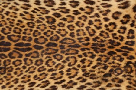 background of real laopard skin Standard-Bild