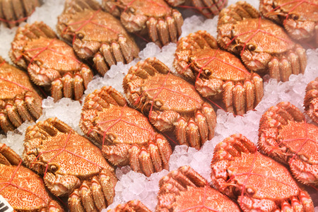 japanese hairy crabs in the market photo