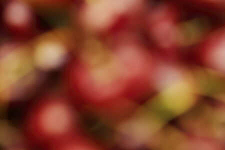 abstract blurry background of red cherry photo