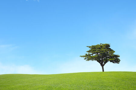 champ vert: background of green field with blue sky