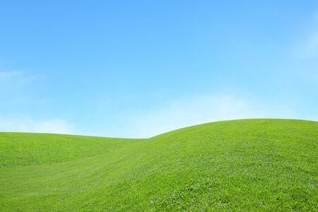 champ vert: fond du champ vert avec le ciel bleu Banque d'images