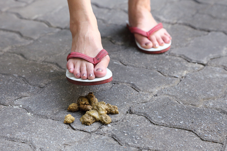 close-up on a woman foot step on a dog poop