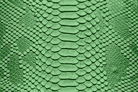 background of sneak skin texture