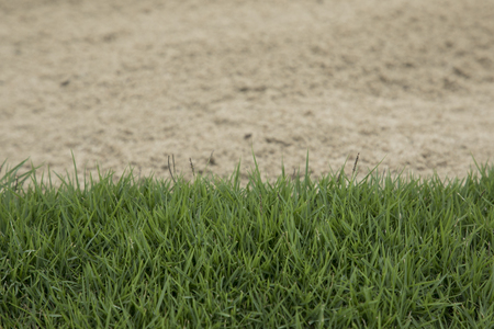 background of green grass with sand bunker in a golf course