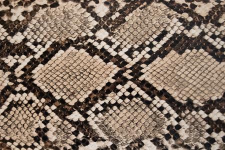 ヘビの皮膚のテクスチャの背景