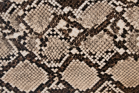 background of snake skin texture Stock Photo