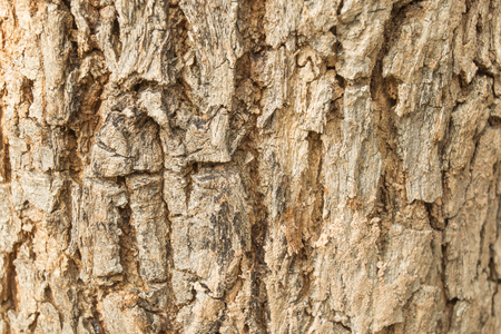 disruption: Disruption of tree bark Red, which shows the growth of the stem. Stock Photo
