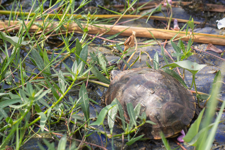 Photo closeup The baby turtles are resting by the red light depend on the scrap heap of old tires floating above blue water with algae stains island.