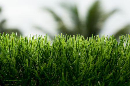 artificial turf under sunlight. Stock fotó