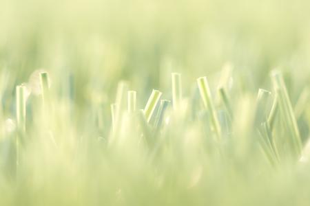 Lawn grass with sunlight Foto de archivo - 110780983