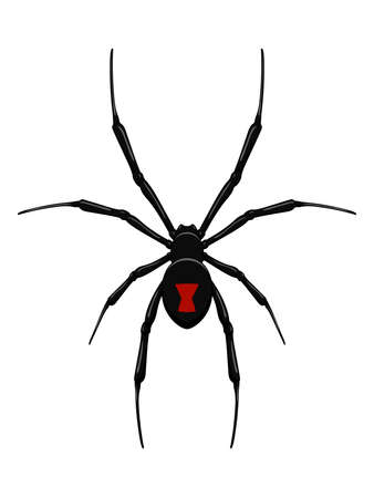 Black widow spider.Vector isolated.