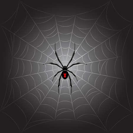 Black spider on web.Vector background.