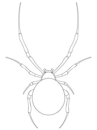 poison symbol: Spider line art.Vector illustration. Illustration