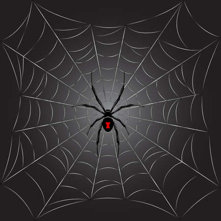 spider: Black spider on web.Vector background.