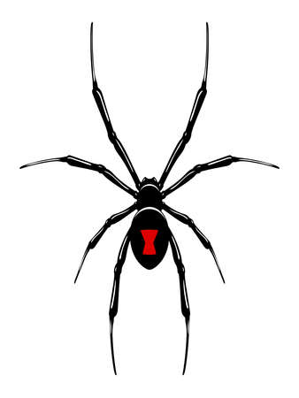 spider web: Black widow spider.Vector isolated.