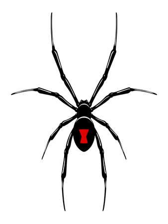 Viuda Negro spider.Vector aislado.