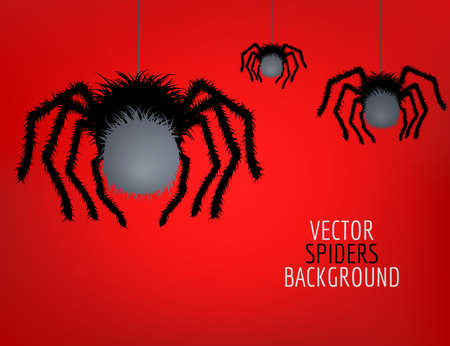Vector spider. Black widow. Spider background.