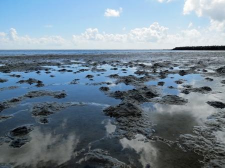 wadden: Low tide on the Wadden