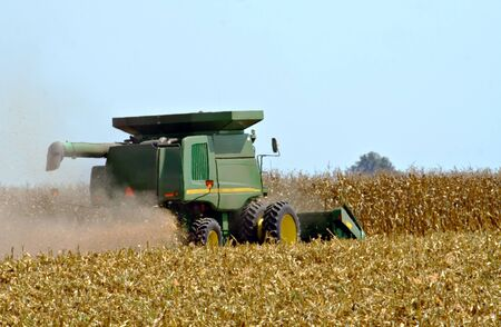 Picking corn with a combine during the fall harvest