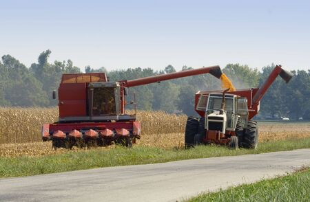 transferring: Harvesting corn and transferring to a wagon Stock Photo