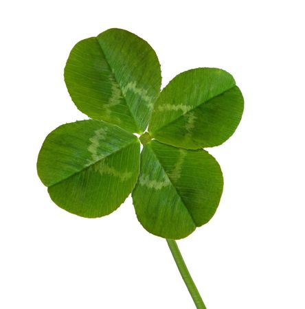four objects: Four leaf clover isolated on white