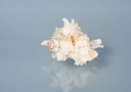 Sea shell on a blue background Stock Photo - 4169512