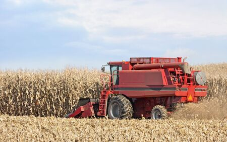 Red combine harvesting corn in a farm field photo