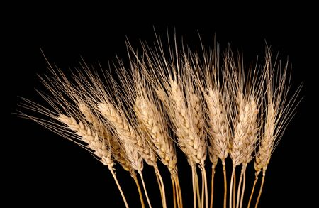 Bunch of wheat stalks isolated on black Stock Photo