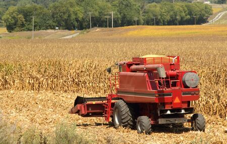 Red combine harvesting a farm field of corn