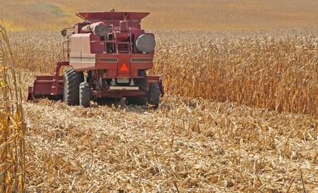 金色のトウモロコシ畑の収穫赤いファーム結合します。