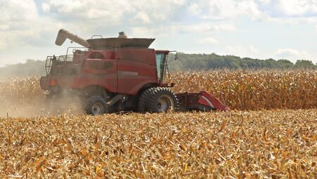 Harvesting corn crop with a red combine