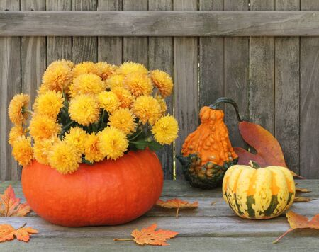 Autumn mums in a gourd on a wood floor Stock Photo