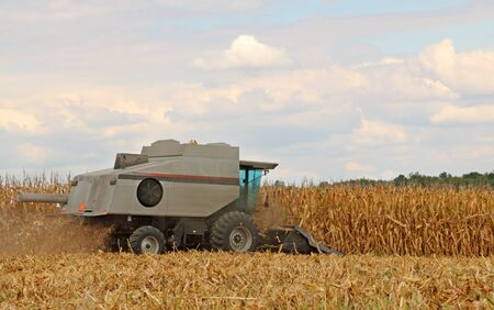 Gray combine picking a field of corn