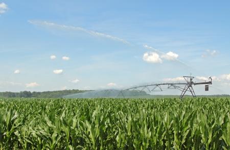 Equipos de riego agr�cola de riego de un cultivo de ma�z Foto de archivo - 14035462