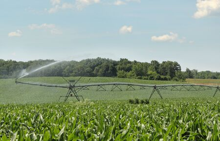 Irrigation system spraying water on a corn crop photo