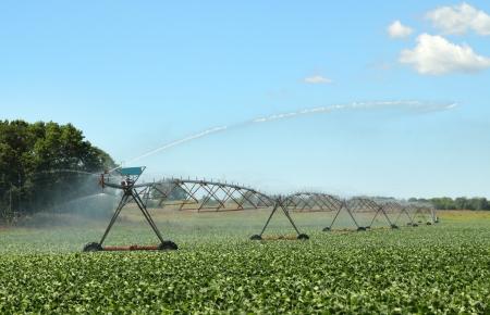 soja: Sistema de riego el riego de un cultivo de soja