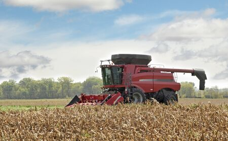 combine: Red combine picking corn from a corn field