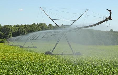 Watering a farm field of corn plants Stock Photo - 17273226