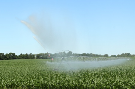 Irrigating a field of corn plants with clear sky Stock Photo - 17438673