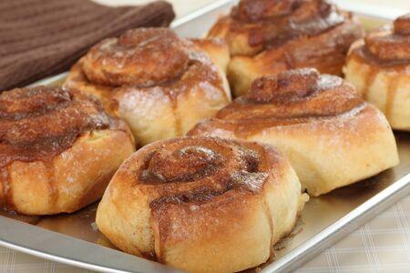 Golden brown cinnamon rolls on a baking pan Stock Photo - 17596848