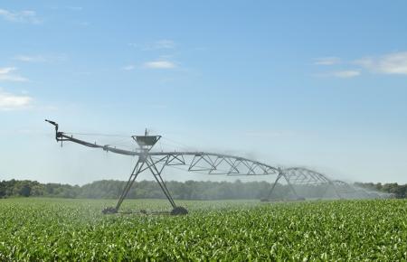 トウモロコシの作物に水をまく潅漑装置 写真素材